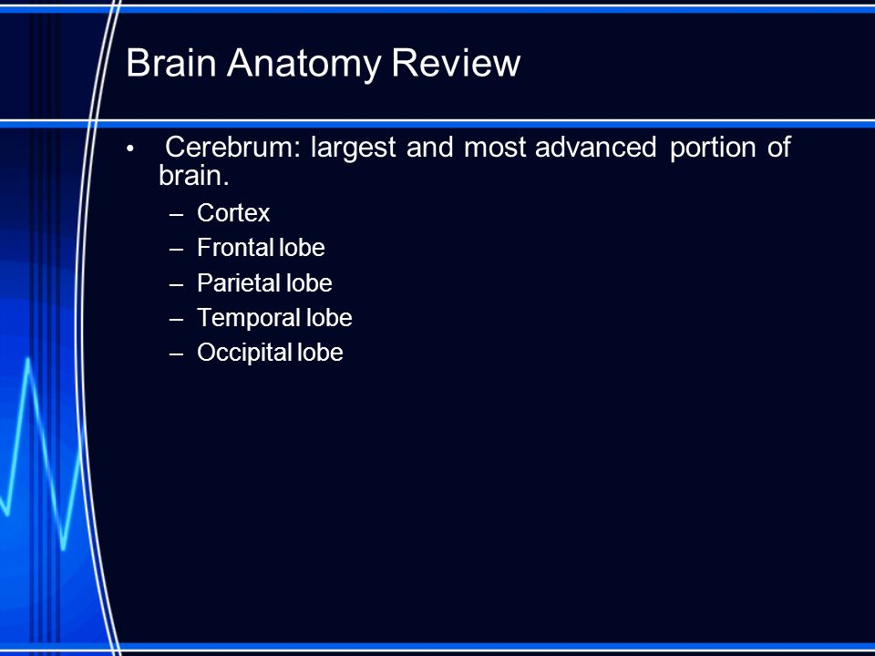 Cerebrum Frontal lobe: –controls planning, organizing, problem solving and selective attention.