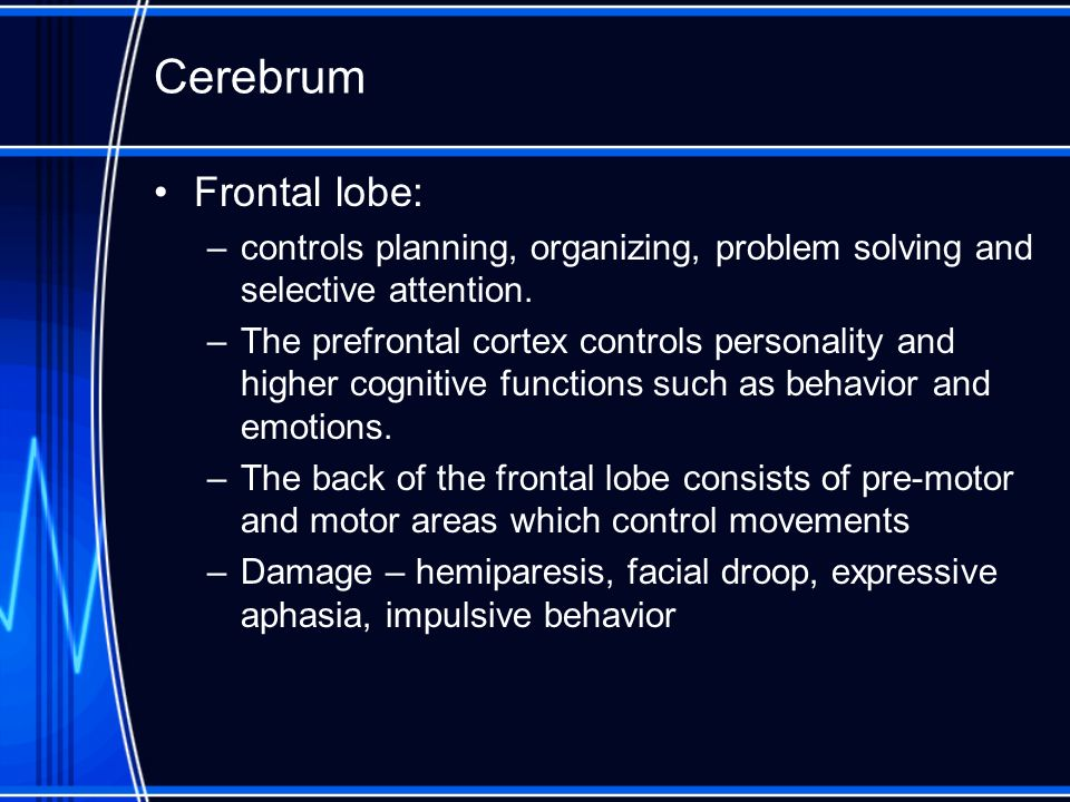 Cerebrum Frontal lobe: –controls planning, organizing, problem solving and selective attention. –The prefrontal cortex controls personality and higher