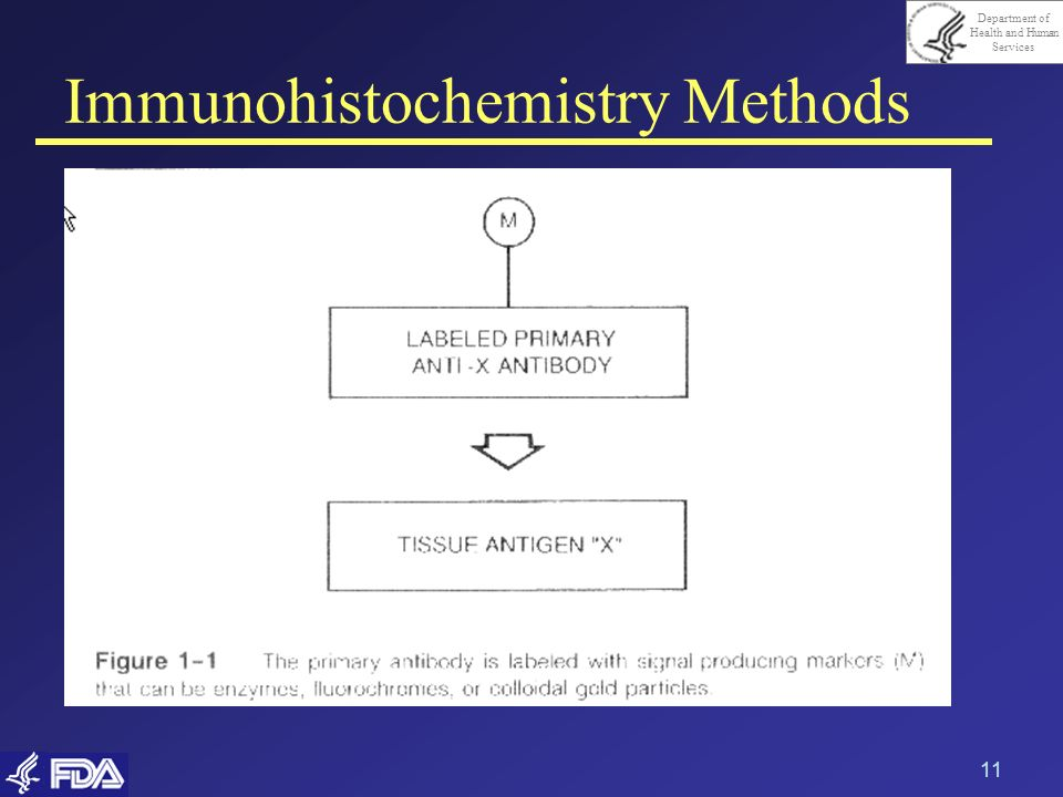 Department of Health and Human Services 11 Immunohistochemistry Methods