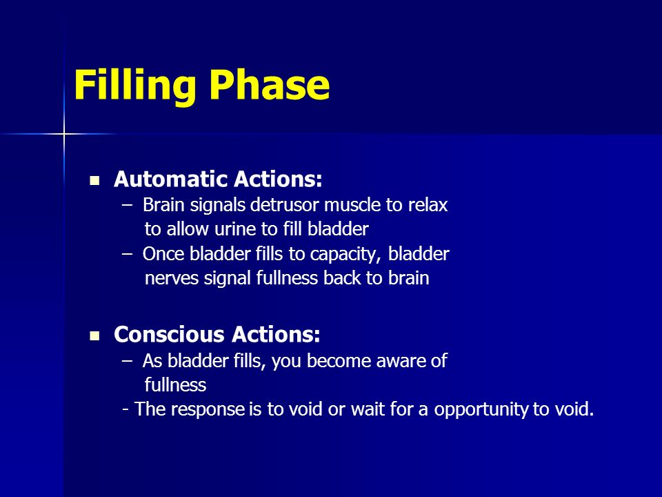 Filling Phase Automatic Actions: –Brain signals detrusor muscle to relax to allow urine to fill bladder –Once bladder fills to capacity, bladder nerves signal fullness back to brain Conscious Actions: –As bladder fills, you become aware of fullness - The response is to void or wait for a opportunity to void.