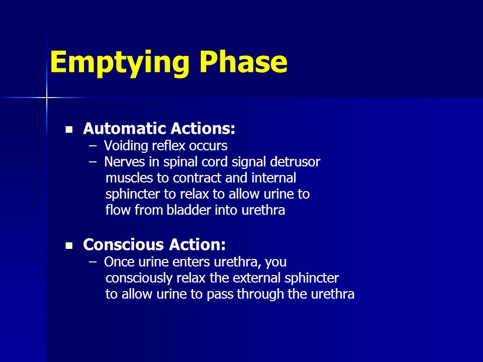 Emptying Phase Automatic Actions: –Voiding reflex occurs –Nerves in spinal cord signal detrusor muscles to contract and internal sphincter to relax to