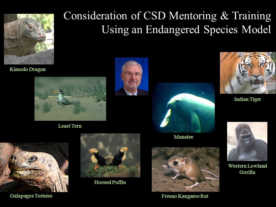 Fresno Kangaroo Rat Manatee Galapagos Tortoise Indian Tiger Least Tern Kimodo Dragon Consideration of CSD Mentoring & Training Using an Endangered Species Model Western Lowland Gorilla Horned Puffin