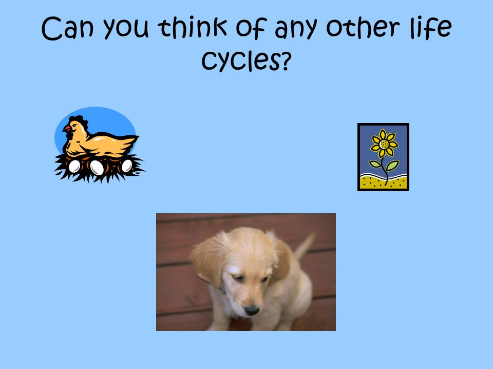 Can you think of any other life cycles