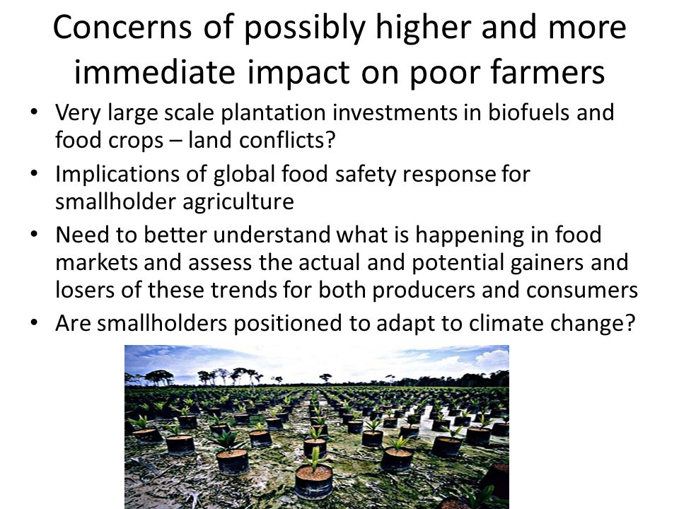 Concerns of possibly higher and more immediate impact on poor farmers Very large scale plantation investments in biofuels and food crops – land conflicts.