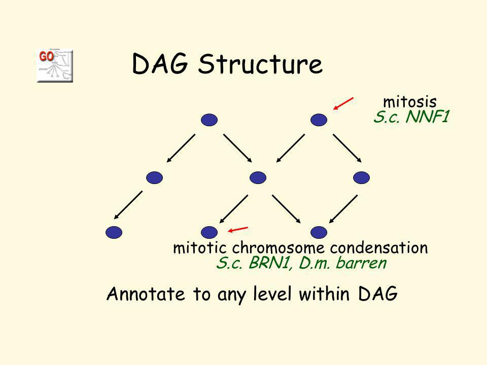 DAG Structure Annotate to any level within DAG mitosis S.c.
