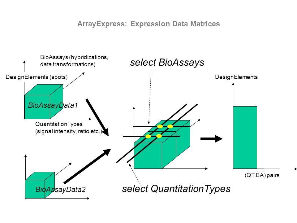 ArrayExpress: Expression Data Matrices BioAssays (hybridizations, data transformations) QuantitationTypes (signal intensity, ratio etc.) BioAssayData1 BioAssayData2 select QuantitationTypes select BioAssays DesignElements (QT,BA) pairs DesignElements (spots)