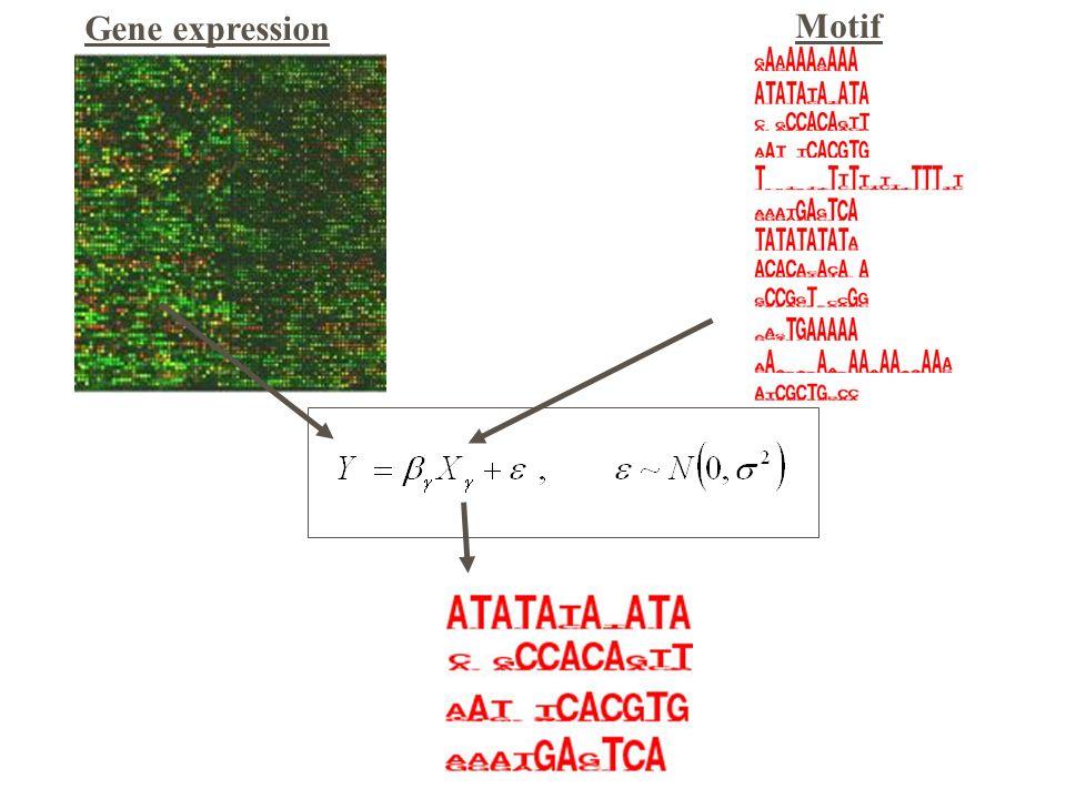 Motif Gene expression