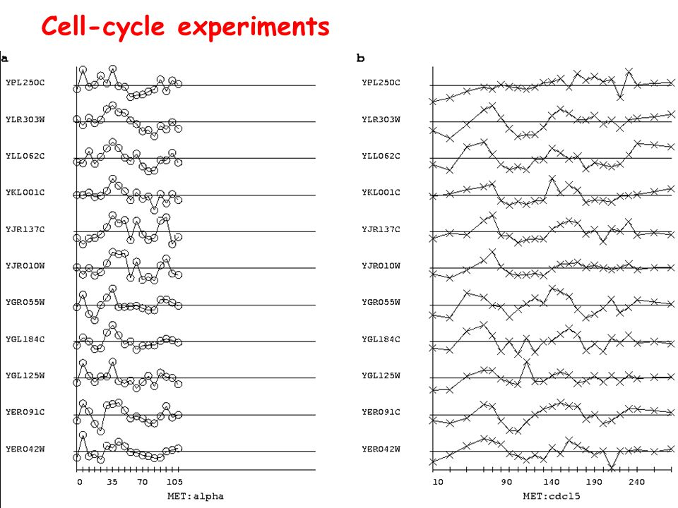 Cell-cycle experiments