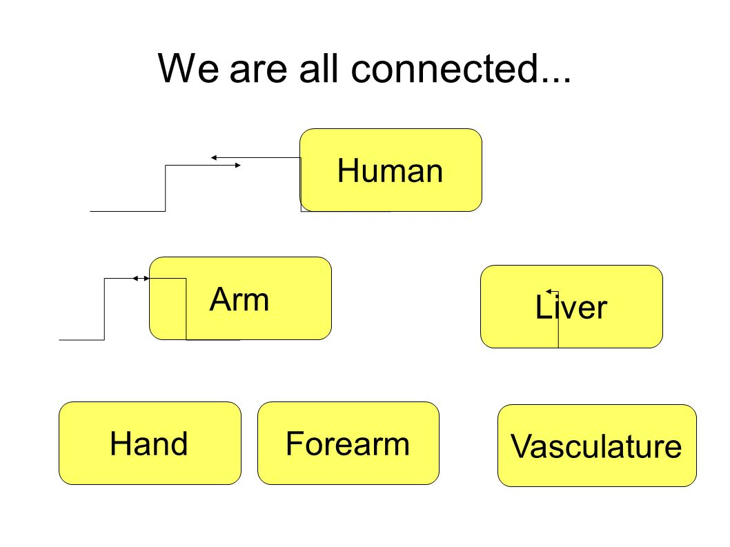 We are all connected... Human Arm HandForearm Liver Vasculature