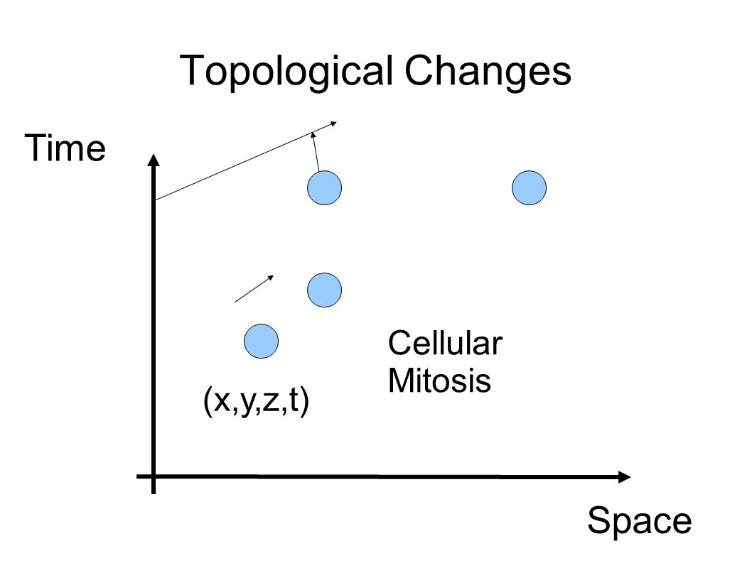 Topological Changes Space Time (x,y,z,t) Cellular Mitosis