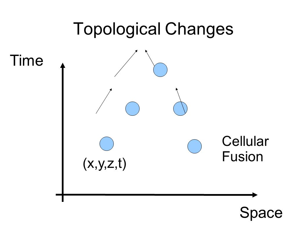 Topological Changes Space Time (x,y,z,t) Cellular Fusion