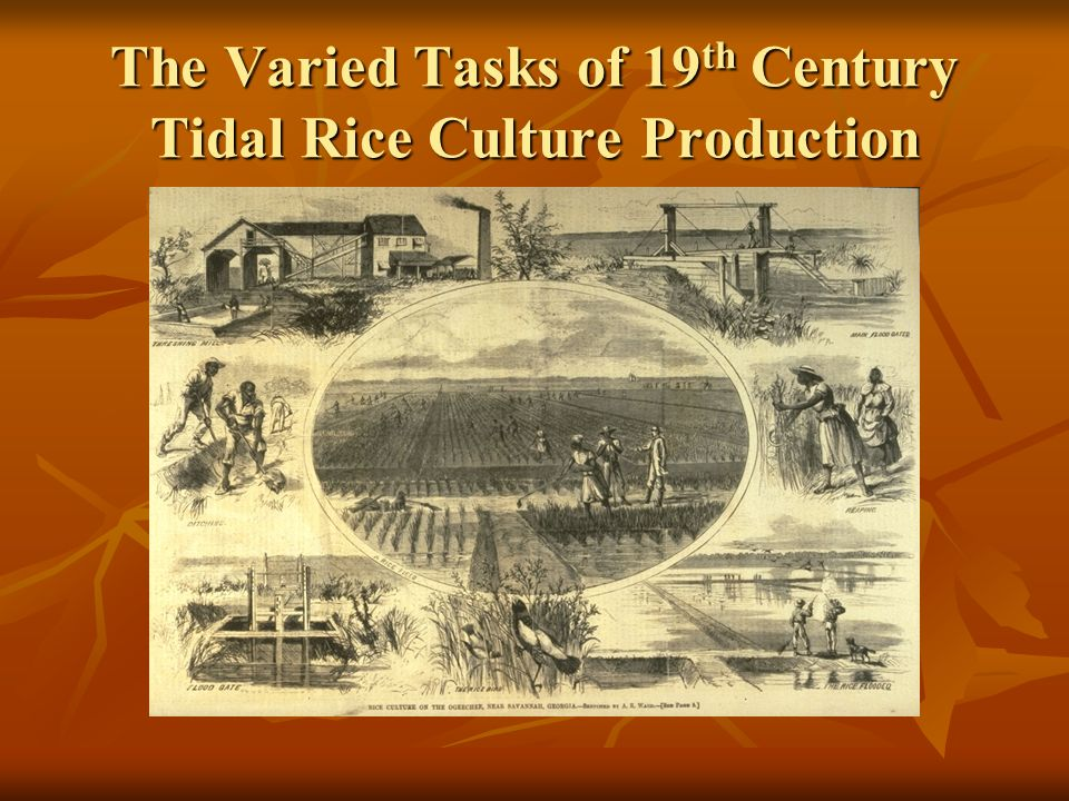 The Varied Tasks of 19 th Century Tidal Rice Culture Production