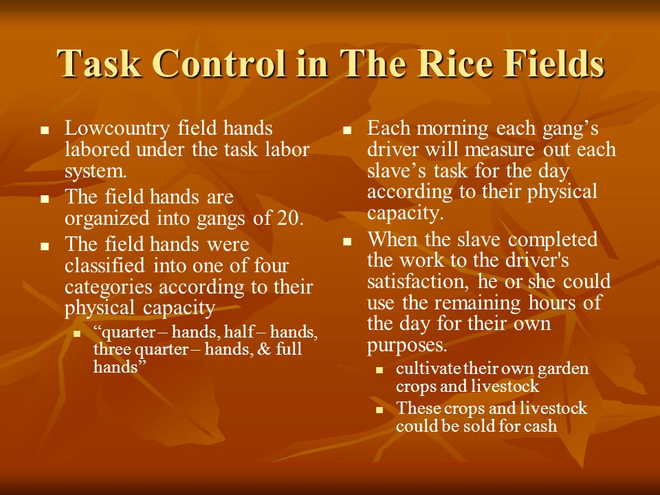 Task Control in The Rice Fields Lowcountry field hands labored under the task labor system.
