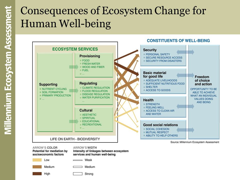 Unprecedented Change Humans have made unprecedented changes to ecosystems in recent decades to meet growing demands for food, fresh water, fiber, and energy These changes have helped to improve the lives of billions, but at the same time they weakened natures ability to deliver other key services such as purification of air and water, protection from disasters, and the provision of medicines The pressures on ecosystems will increase globally in coming decades unless human attitudes and actions change