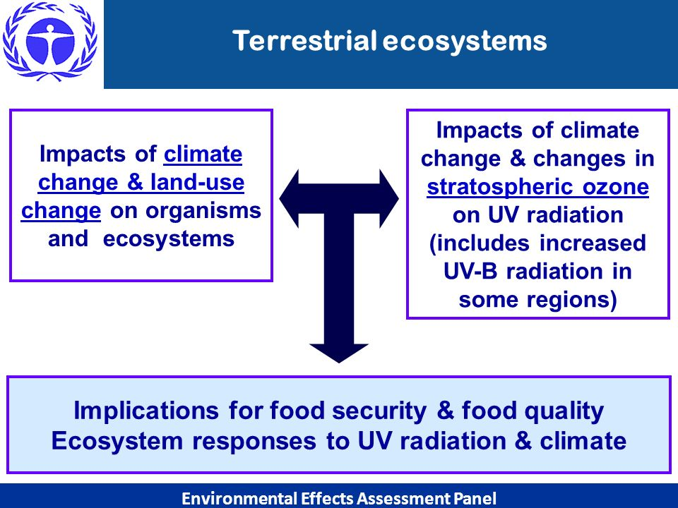 Implications for food security & food quality Ecosystem responses to UV radiation & climate Environmental Effects Assessment Panel Impacts of climate