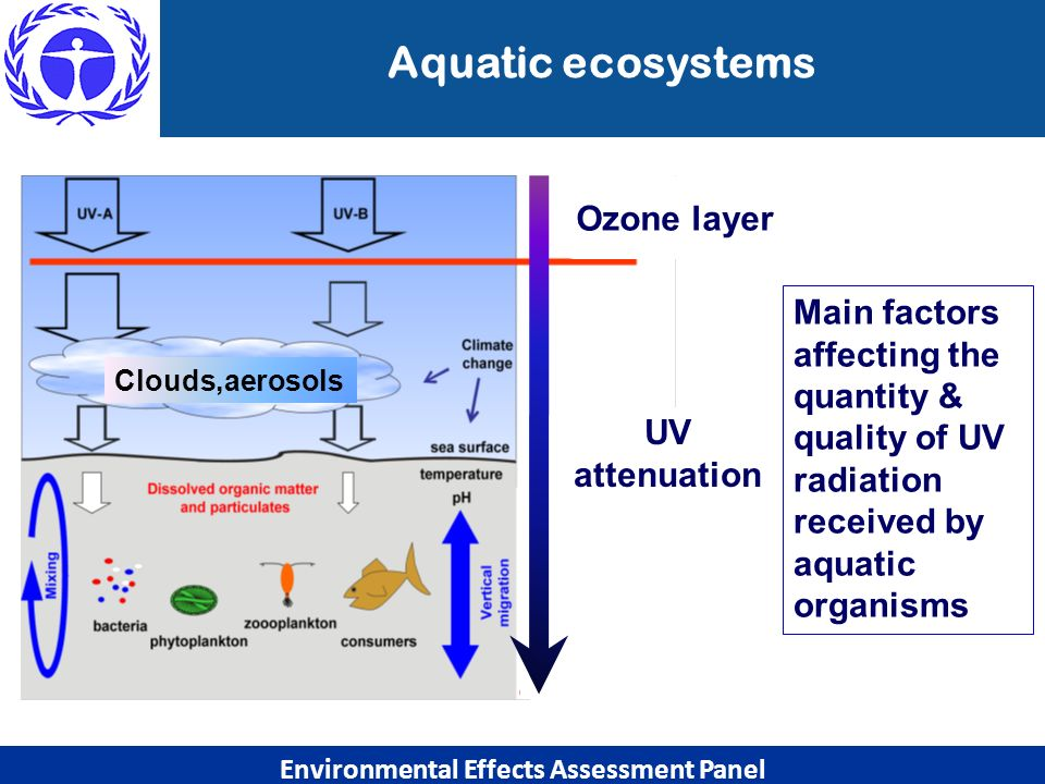 Aquatic ecosystems Ozone layer Clouds,aerosols UV attenuation Environmental Effects Assessment Panel Main factors affecting the quantity & quality of