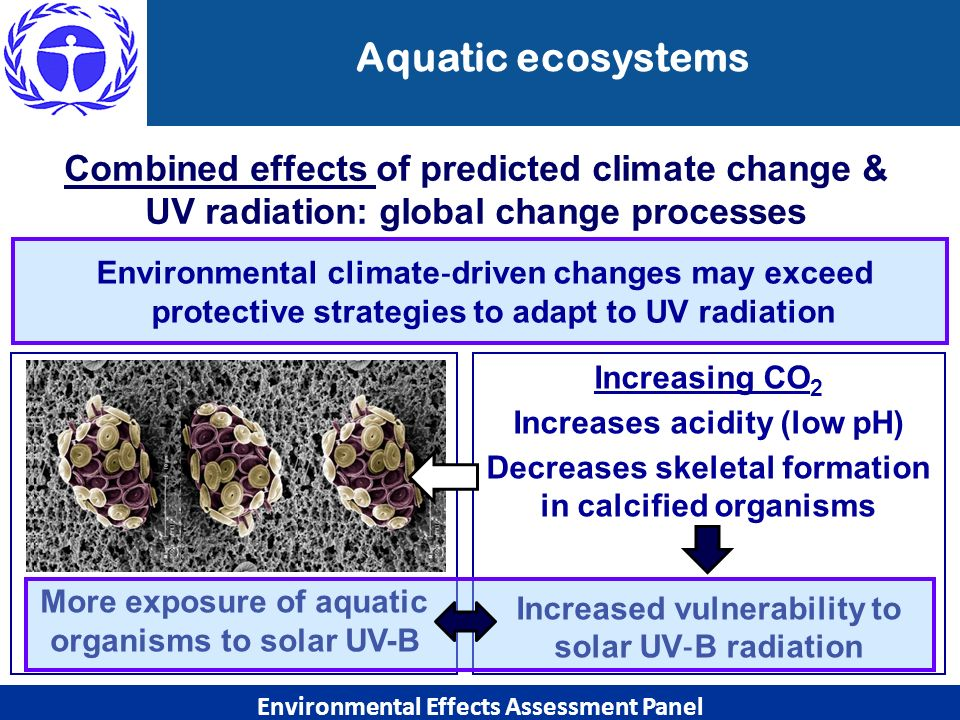 Aquatic ecosystems Environmental climate driven changes may exceed protective strategies to adapt to UV radiation Combined effects of predicted climat