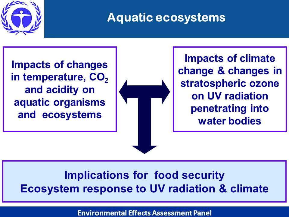 Aquatic ecosystems Environmental Effects Assessment Panel Implications for food security Ecosystem response to UV radiation & climate Impacts of chang