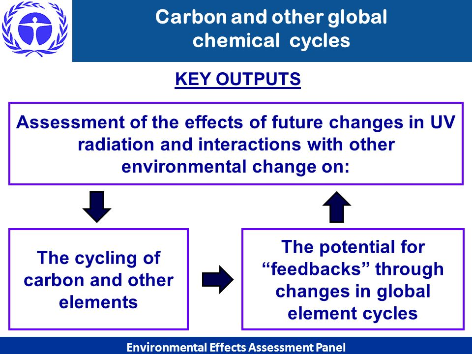Carbon and other global chemical cycles Environmental Effects Assessment Panel The cycling of carbon and other elements Assessment of the effects of f