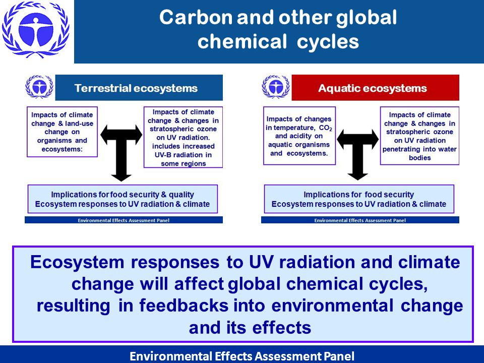 Environmental Effects Assessment Panel Ecosystem responses to UV radiation and climate change will affect global chemical cycles, resulting in feedbac