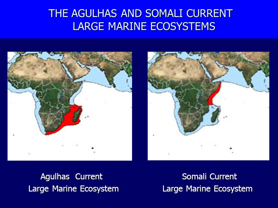 THE AGULHAS AND SOMALI CURRENT LARGE MARINE ECOSYSTEMS THE AGULHAS AND SOMALI CURRENT LARGE MARINE ECOSYSTEMS Agulhas Current Somali Current Large Mar