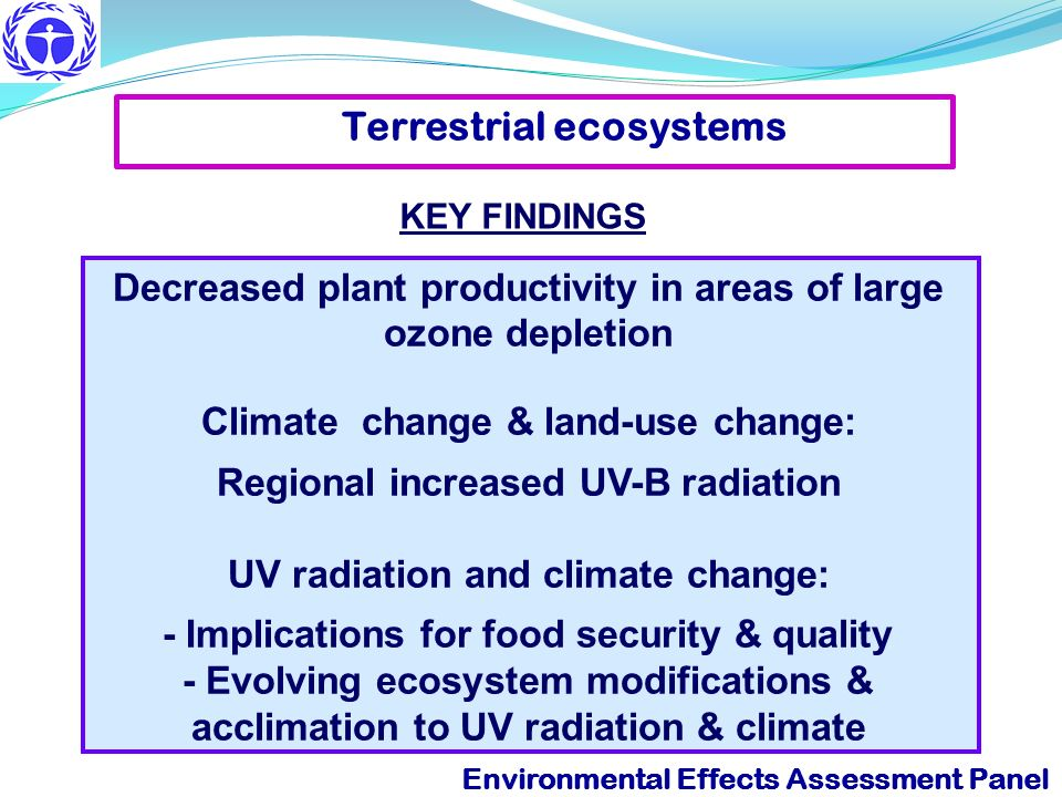 Decreased plant productivity in areas of large ozone depletion Climate change & land-use change: Regional increased UV-B radiation UV radiation and cl