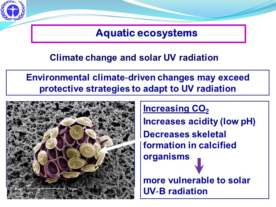 Aquatic ecosystems Environmental climate driven changes may exceed protective strategies to adapt to UV radiation Climate change and solar UV radiatio