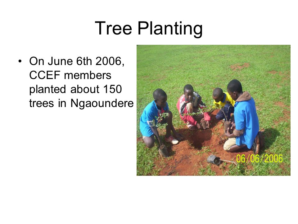 Tree Planting On June 6th 2006, CCEF members planted about 150 trees in Ngaoundere