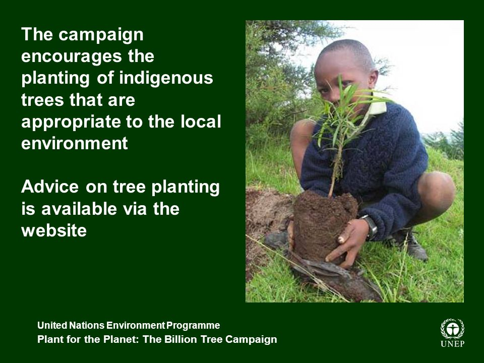 United Nations Environment Programme Plant for the Planet: The Billion Tree Campaign The campaign encourages the planting of indigenous trees that are