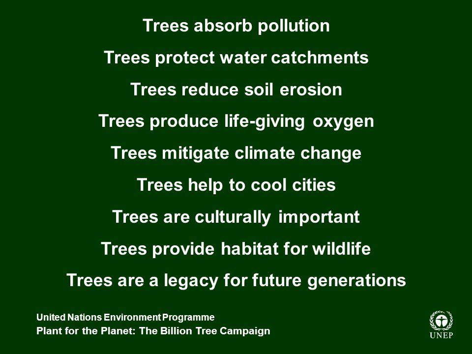 United Nations Environment Programme Plant for the Planet: The Billion Tree Campaign The Campaign aims to: Build on existing programmes Foster partnerships