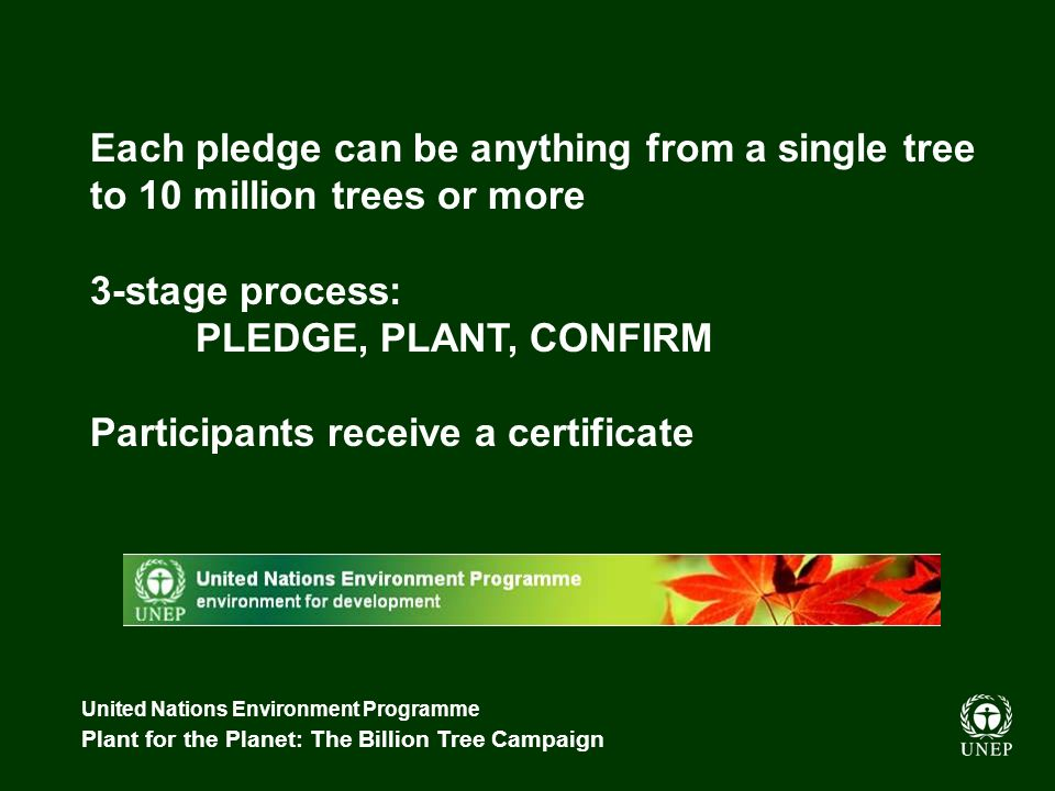 United Nations Environment Programme Plant for the Planet: The Billion Tree Campaign Each pledge can be anything from a single tree to 10 million trees or more 3-stage process: PLEDGE, PLANT, CONFIRM Participants receive a certificate
