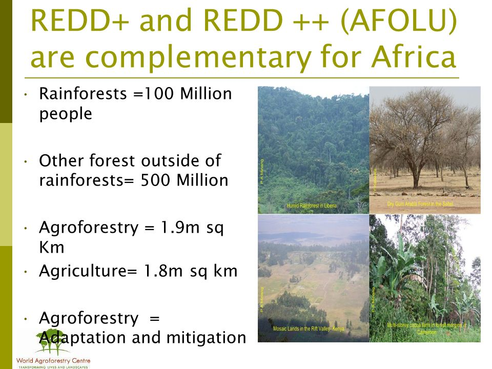 REDD+ and REDD ++ (AFOLU) are complementary for Africa Rainforests =100 Million people Other forest outside of rainforests= 500 Million Agroforestry = 1.9m sq Km Agriculture= 1.8m sq km Agroforestry = Adaptation and mitigation