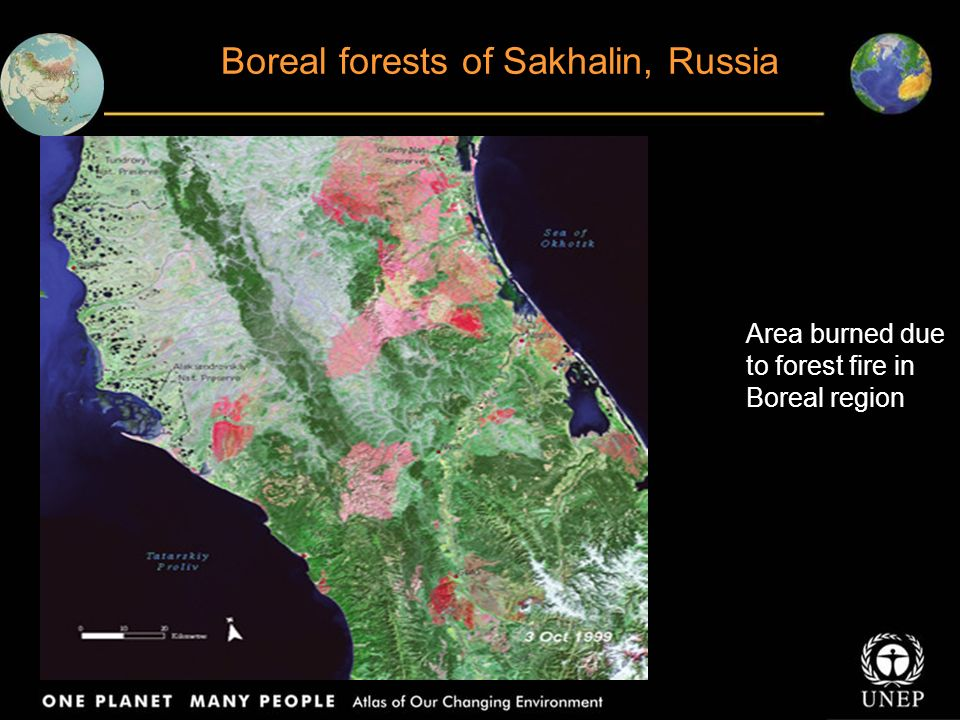 Disturbances in forest cover in Arkhangelsk Russia In some places, large sections of the forest have been clear-felled Other places show a block pattern, where sections of relatively undisturbed forest are left between clear- felled sections