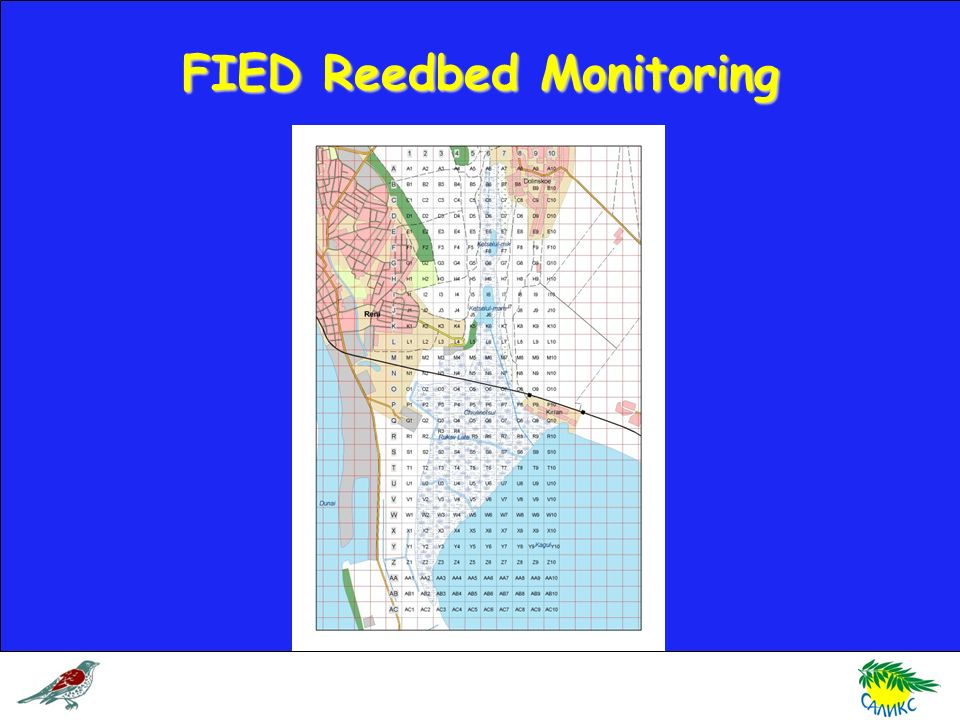 FIED Reedbed Monitoring