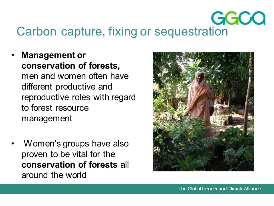 The Global Gender and Climate Alliance Carbon capture, fixing or sequestration Management or conservation of forests, men and women often have different productive and reproductive roles with regard to forest resource management Womens groups have also proven to be vital for the conservation of forests all around the world