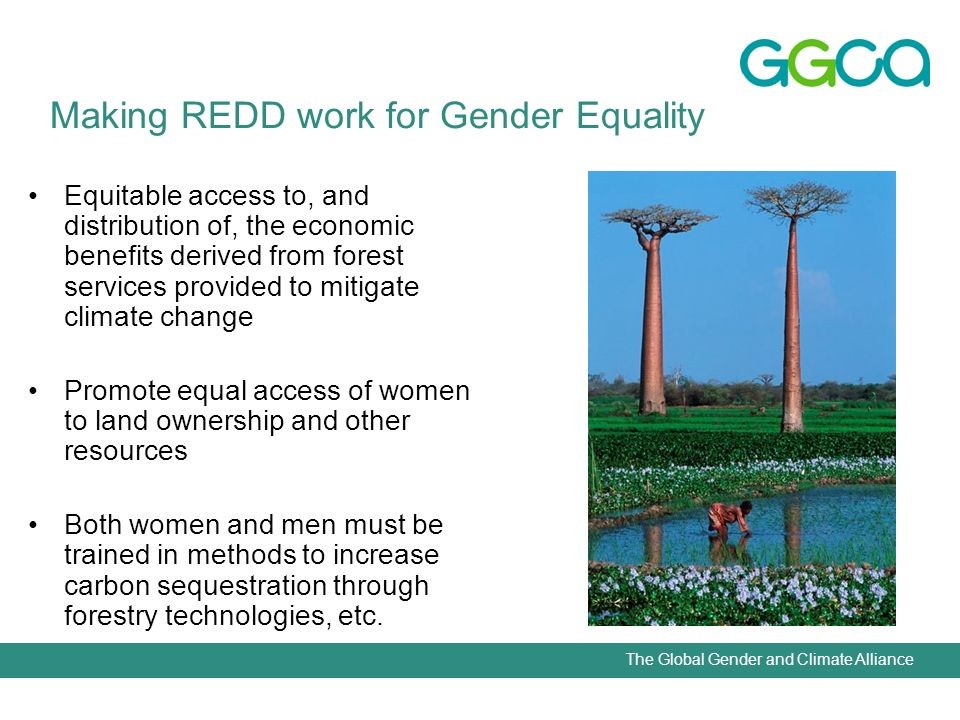 The Global Gender and Climate Alliance Equitable access to, and distribution of, the economic benefits derived from forest services provided to mitigate climate change Promote equal access of women to land ownership and other resources Both women and men must be trained in methods to increase carbon sequestration through forestry technologies, etc.