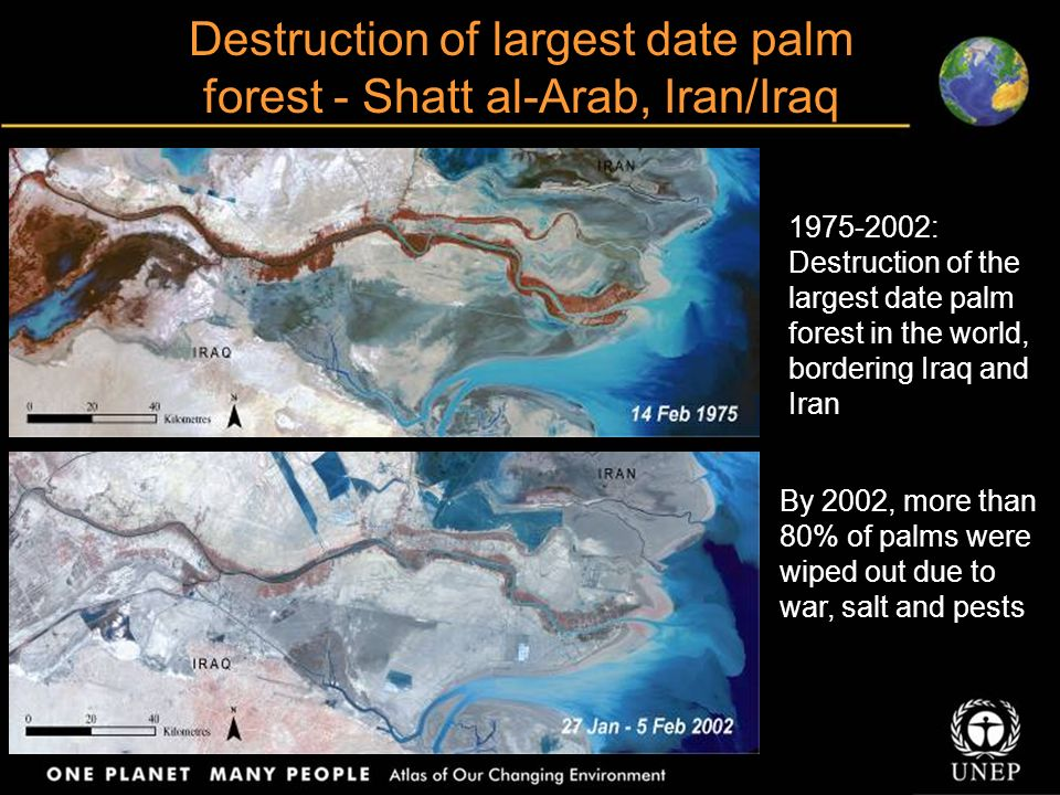 Destruction of largest date palm forest - Shatt al-Arab, Iran/Iraq 1975-2002: Destruction of the largest date palm forest in the world, bordering Iraq