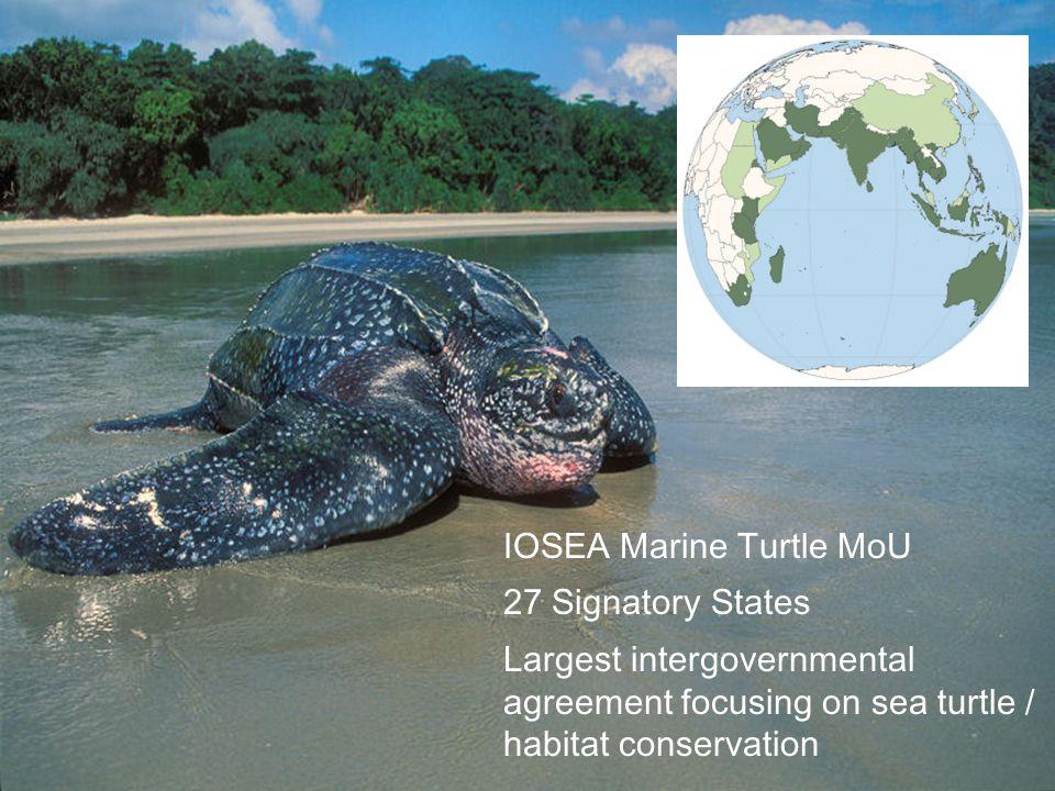 IOSEA Marine Turtle MoU 27 Signatory States Largest intergovernmental agreement focusing on sea turtle / habitat conservation