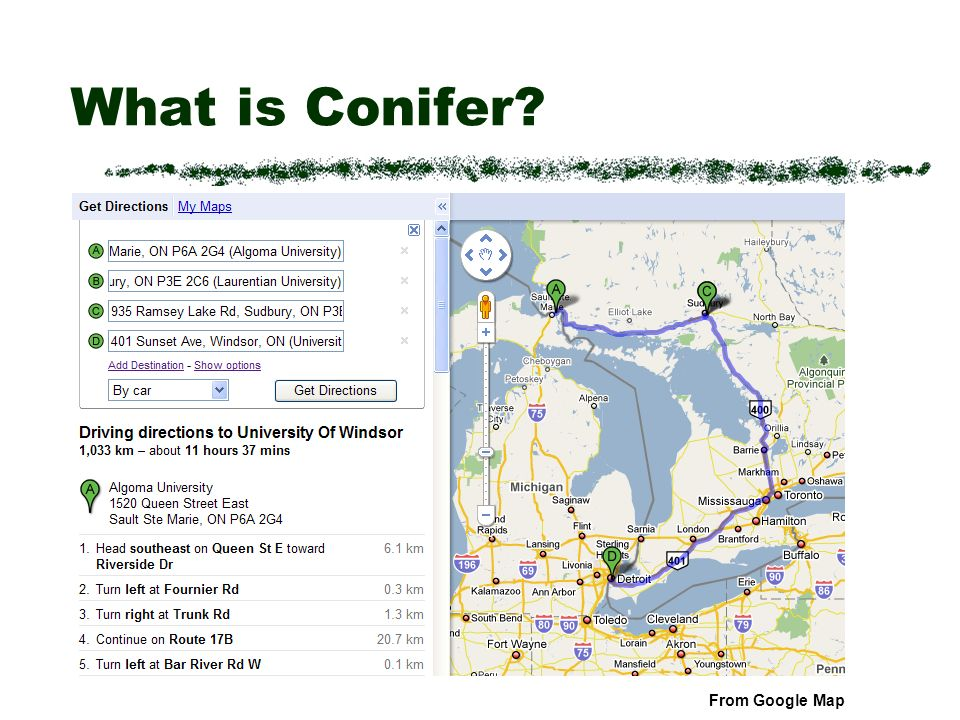 What is Conifer From Google Map