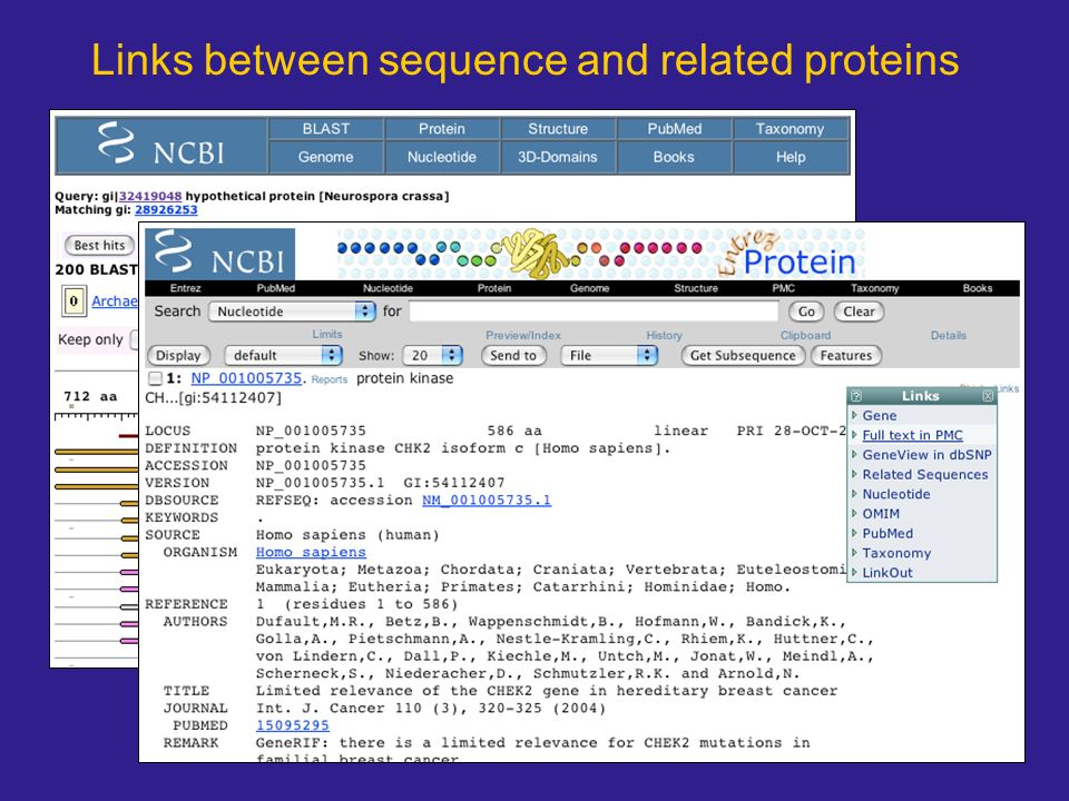 Links between sequence and related proteins