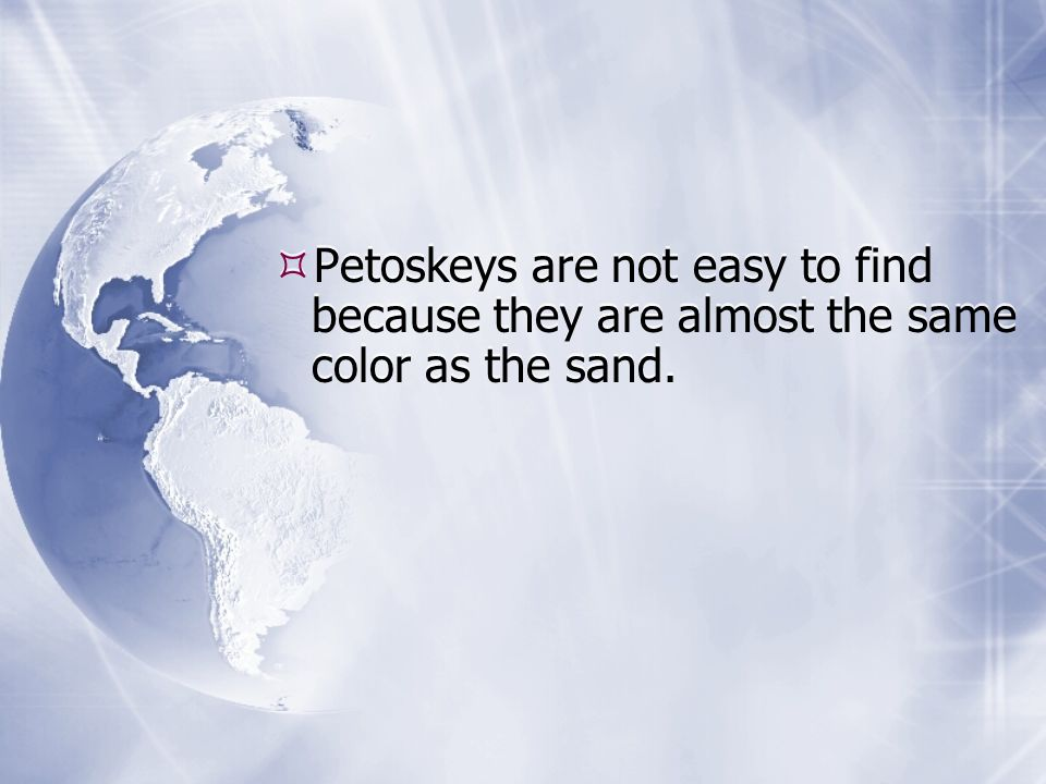 Petoskeys are not easy to find because they are almost the same color as the sand.