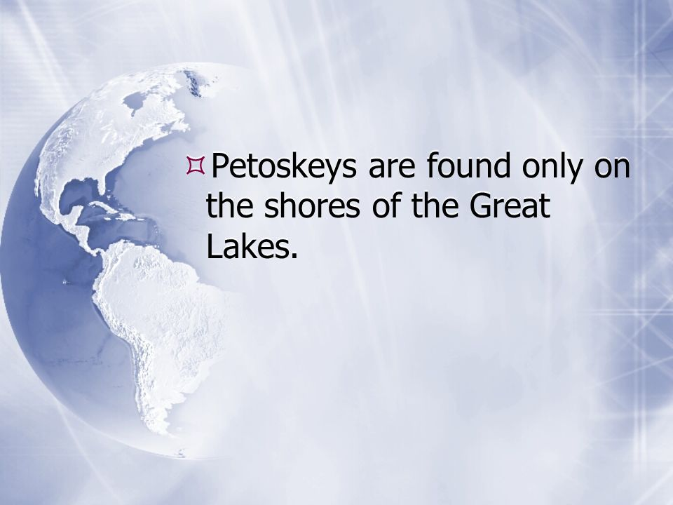 Petoskeys are found only on the shores of the Great Lakes.