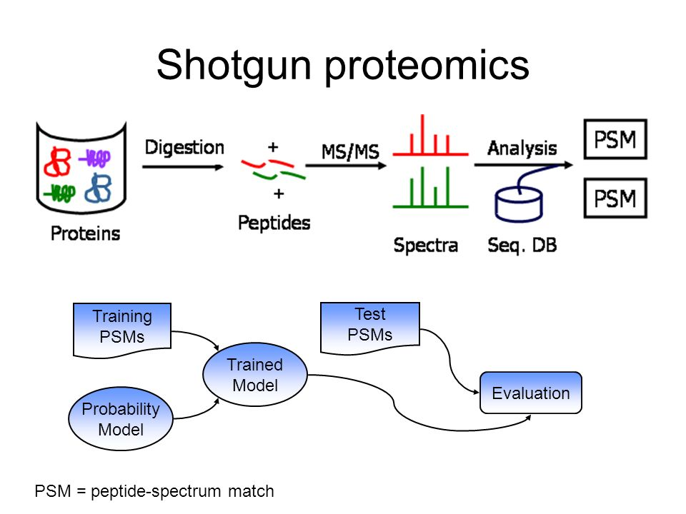 Shotgun proteomics Trained Model Test PSMs Training PSMs Probability Model Evaluation PSM = peptide-spectrum match