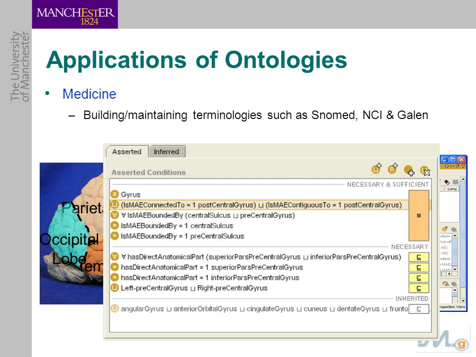 Applications of Ontologies Medicine –Building/maintaining terminologies such as Snomed, NCI & Galen Frontal Lobe Temporal Lobe Parietal Lobe Occipital