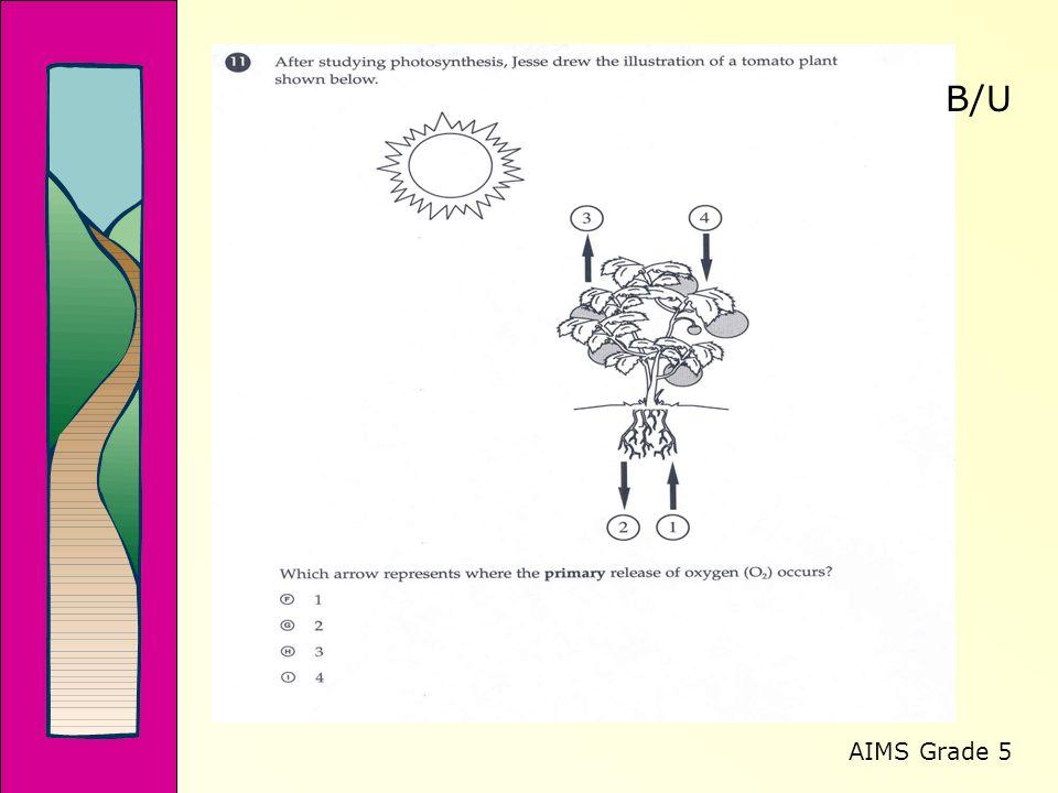 AIMS Grade 5 B/U