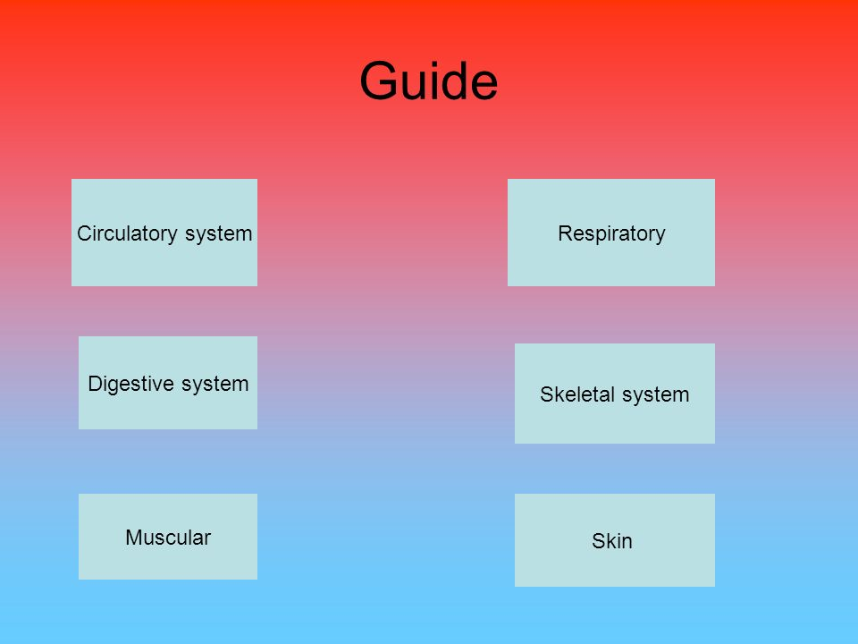 Guide Circulatory system Digestive system Muscular Respiratory Skeletal system Skin
