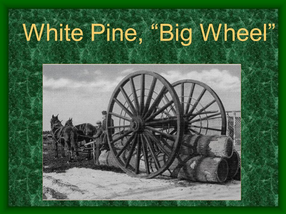 White Pine, Big Wheel