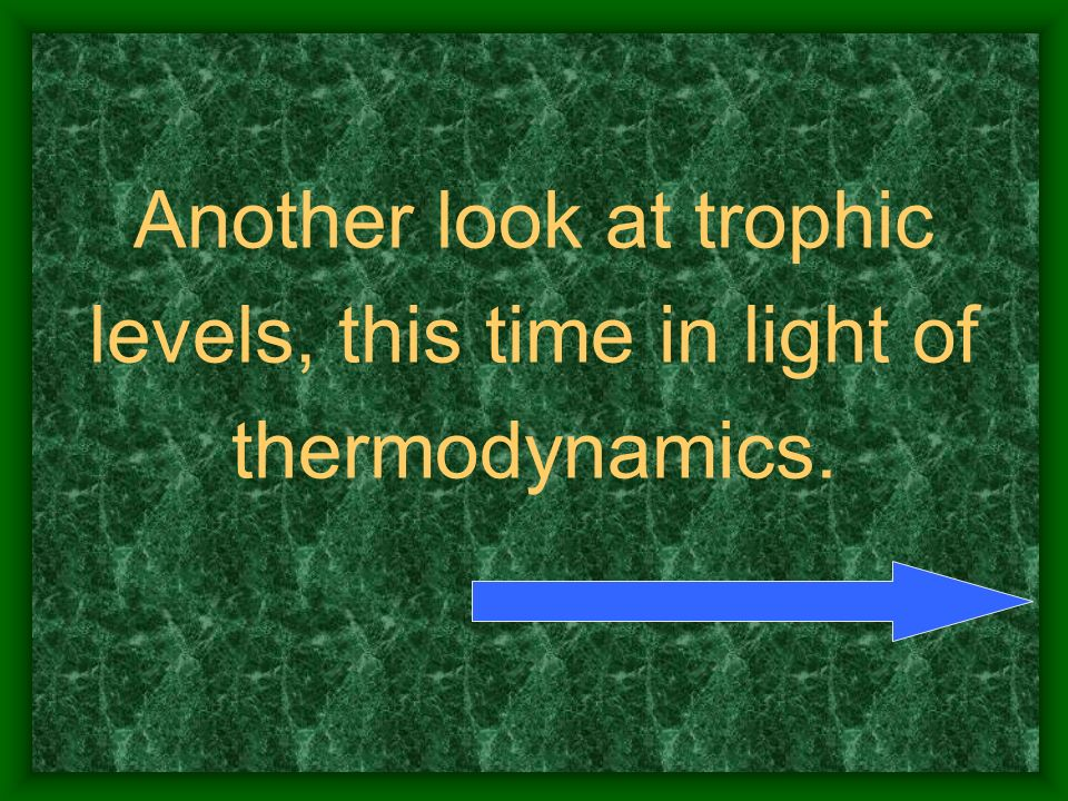 Another look at trophic levels, this time in light of thermodynamics.