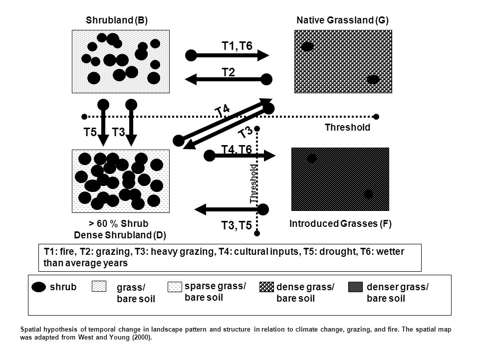 T4,T6 T4 Shrubland (B) Native Grassland (G) T3 T3,T5 Introduced Grasses (F)> 60 % Shrub Dense Shrubland (D) T1: fire, T2: grazing, T3: heavy grazing, T4: cultural inputs, T5: drought, T6: wetter than average years Threshold T5 T2 T1,T6 shrub grass/ bare soil sparse grass/ bare soil dense grass/ bare soil denser grass/ bare soil Spatial hypothesis of temporal change in landscape pattern and structure in relation to climate change, grazing, and fire.