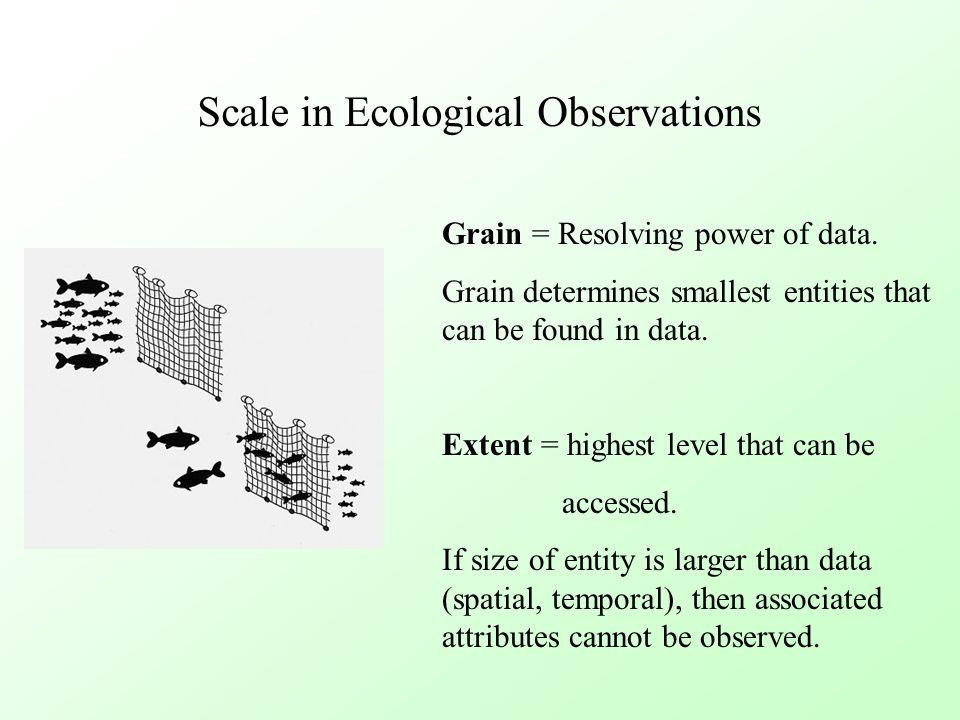Scale in Ecological Observations Grain = Resolving power of data. Grain determines smallest entities that can be found in data. Extent = highest level